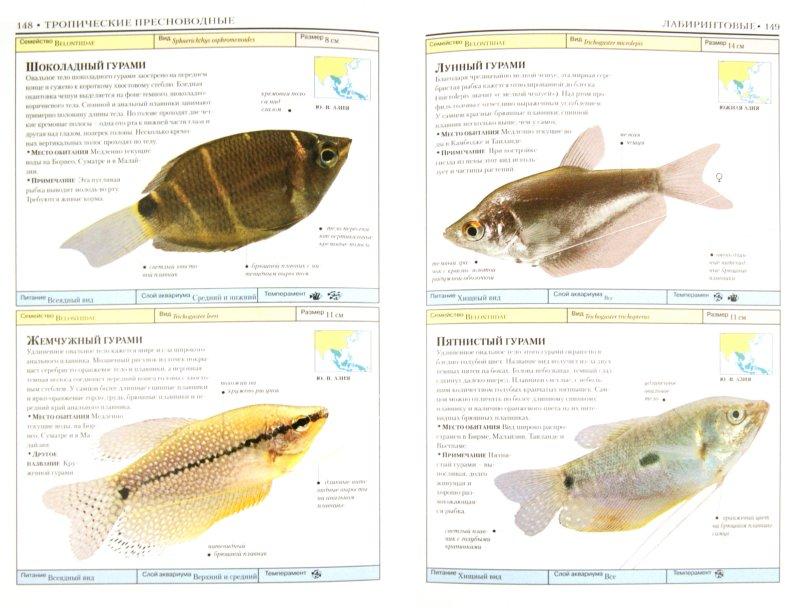 Иллюстрация 1 из 9 для Аквариумные рыбки - Дик Миллс | Лабиринт - книги. Источник: Лабиринт