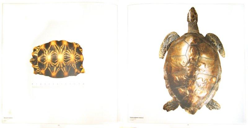 Иллюстрация 1 из 3 для Дарвиновский музей. 100 лет со дня основания. 1907-2007 | Лабиринт - книги. Источник: Лабиринт