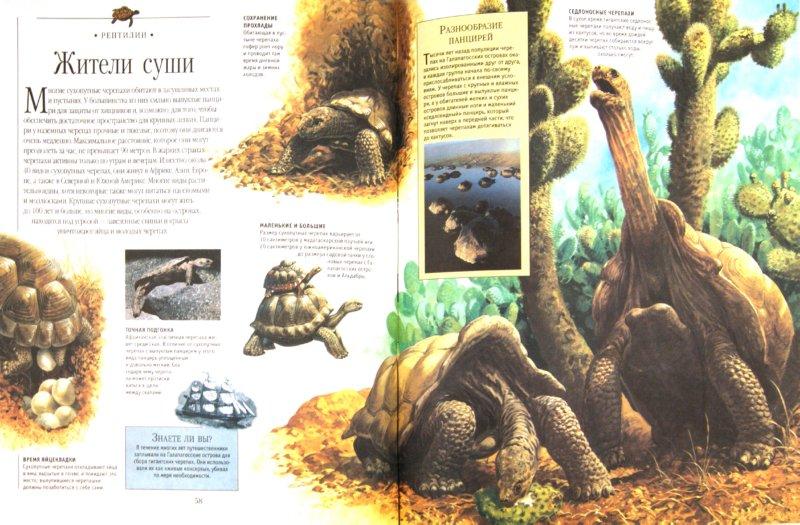 Иллюстрация 1 из 6 для Энциклопедия живого мира | Лабиринт - книги. Источник: Лабиринт