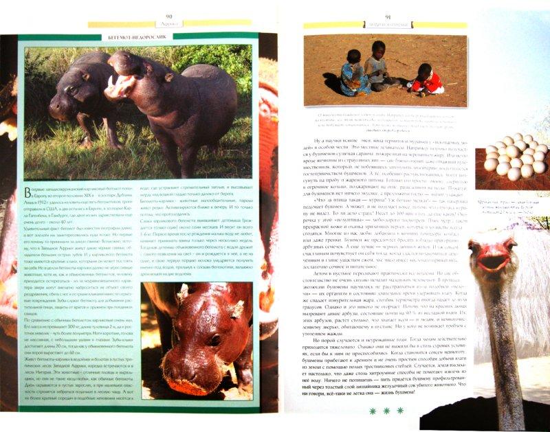 Иллюстрация 1 из 28 для Последний шанс увидеть: Племена. Обычаи. Исчезающие виды животных | Лабиринт - книги. Источник: Лабиринт
