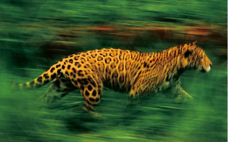 Иллюстрация 1 из 2 для Jungles - Frans Lanting | Лабиринт - книги. Источник: Лабиринт
