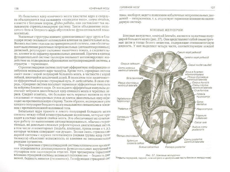 Иллюстрация 1 из 8 для Функциональная анатомия центральной нервной системы - Гайворонский, Гайворонский | Лабиринт - книги. Источник: Лабиринт