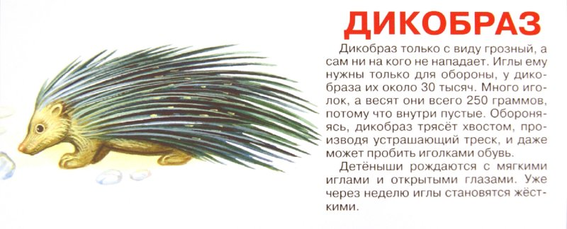 Иллюстрация 1 из 4 для Животные. Набор карточек   Лабиринт - книги. Источник: Лабиринт
