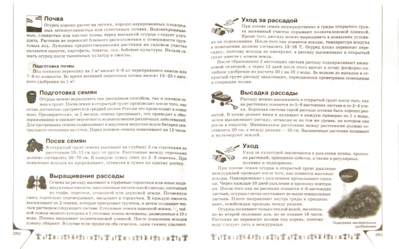Иллюстрация 1 из 14 для Полная энциклопедия огородника - Надежда Севостьянова   Лабиринт - книги. Источник: Лабиринт