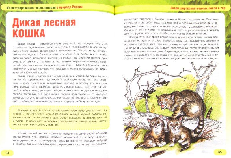 Иллюстрация 1 из 14 для Звери наших лесов и степей - Сергей Шустов | Лабиринт - книги. Источник: Лабиринт