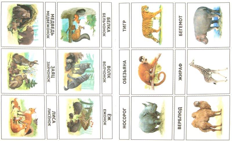 Иллюстрация 1 из 4 для Игры-упражнения на обобщение и систематизацию знаний. Мир животных. Дикие звери жарк. и хол. стран… | Лабиринт - книги. Источник: Лабиринт