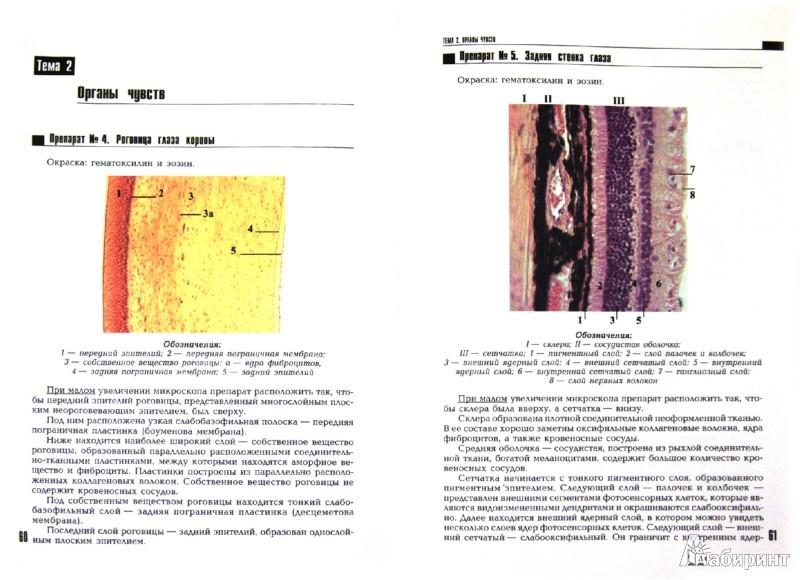 Иллюстрация 1 из 12 для Атлас по гистологии - Н. Мусиенко | Лабиринт - книги. Источник: Лабиринт