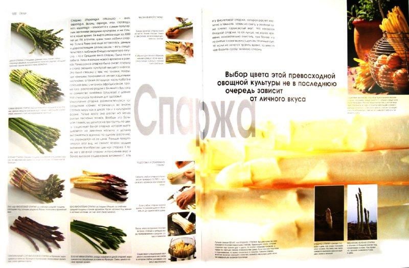 Иллюстрация 1 из 21 для Кулинария. Весь мир продуктов питания - Кристиан Тойбнер | Лабиринт - книги. Источник: Лабиринт