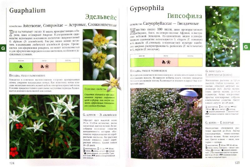Иллюстрация 1 из 17 для Библия садовых растений - Березкина, Григорьева | Лабиринт - книги. Источник: Лабиринт