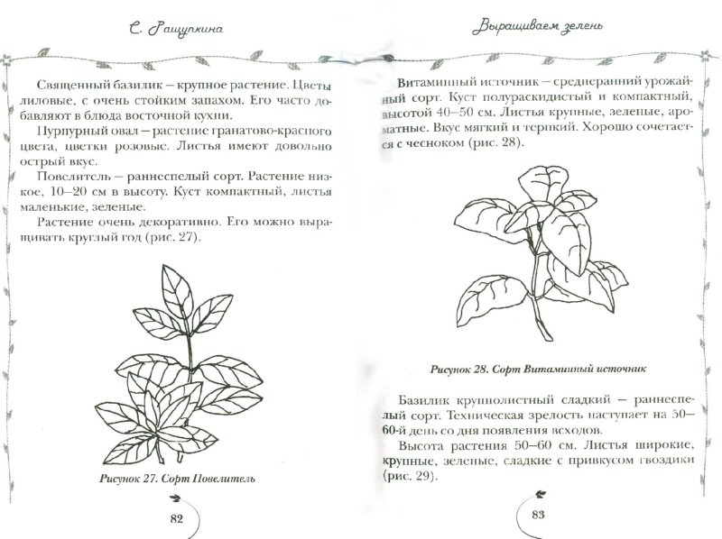 Иллюстрация 1 из 14 для Овощи и зелень. Огород на моем подоконнике - Светлана Ращупкина | Лабиринт - книги. Источник: Лабиринт