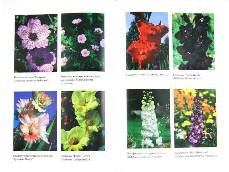Иллюстрация 1 из 7 для Все цветы на вашем участке - Елена Майорова | Лабиринт - книги. Источник: Лабиринт
