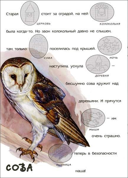 Иллюстрация 1 из 16 для В нашем лесу. Мир животных | Лабиринт - книги. Источник: Лабиринт