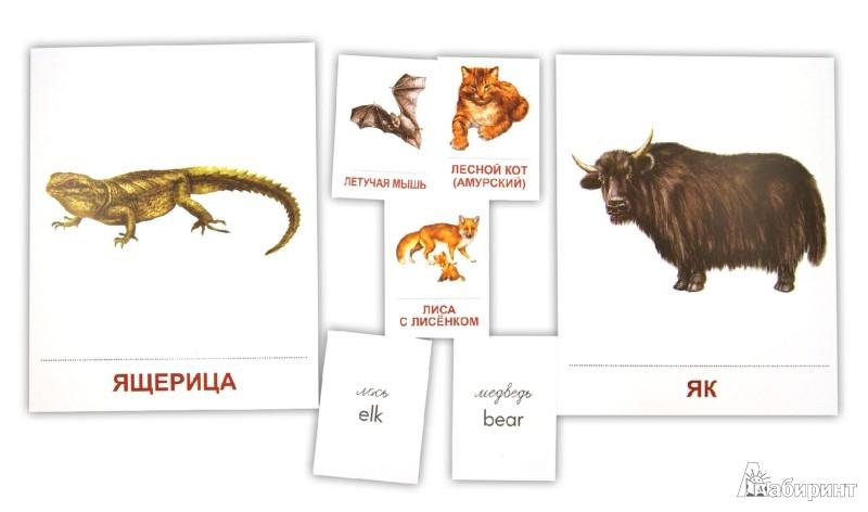"""Иллюстрация 1 из 17 для Демонстрационные карточки """"Дикие животные -2"""" - Т. Шорыгина   Лабиринт - книги. Источник: Лабиринт"""