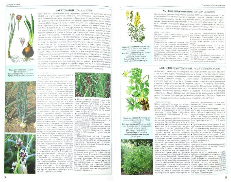 Иллюстрация 1 из 16 для Все о лекарственных растениях | Лабиринт - книги. Источник: Лабиринт