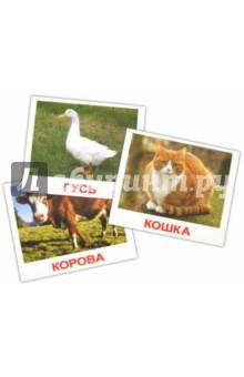 """Комплект карточек мини """"Домашние животные"""" 8х10 см"""