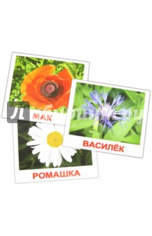 "Комплект карточек ""Цветы"" 16,5х19,5 см"