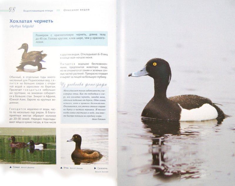 Иллюстрация 1 из 8 для Птицы. Водоплавающие и околоводные (+CD) - Ксения Митителло   Лабиринт - книги. Источник: Лабиринт