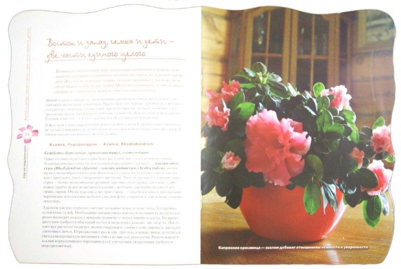 Иллюстрация 1 из 23 для Красивый сад на вашем подоконнике - Е. Волкова | Лабиринт - книги. Источник: Лабиринт