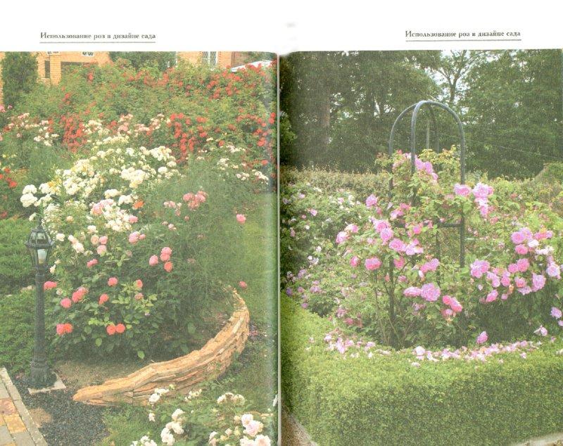 Иллюстрация 1 из 10 для Розы в открытом грунте. Посадка. Уход. Размножение - Крупина, Медведев | Лабиринт - книги. Источник: Лабиринт