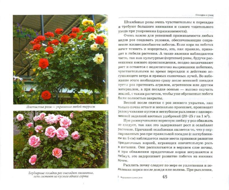 Описание и выращивание роз