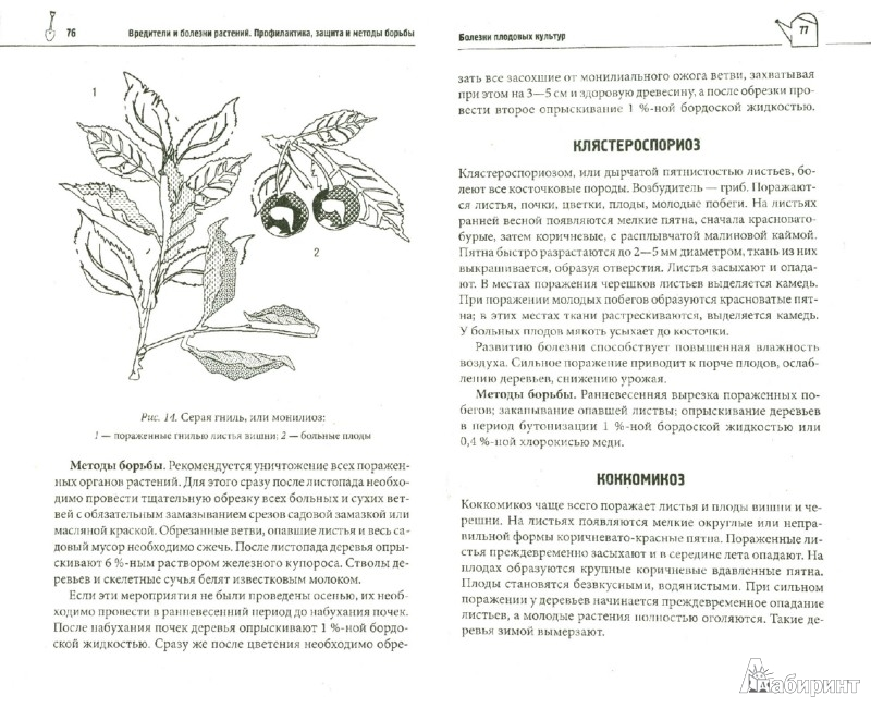 Иллюстрация 1 из 16 для Вредители и болезни растений. Профилактика, защита, методы борьбы | Лабиринт - книги. Источник: Лабиринт