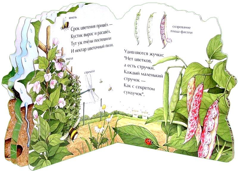 Иллюстрация 1 из 4 для Маленькая фасолинка. Малышам о природе - Екатерина Карганова | Лабиринт - книги. Источник: Лабиринт
