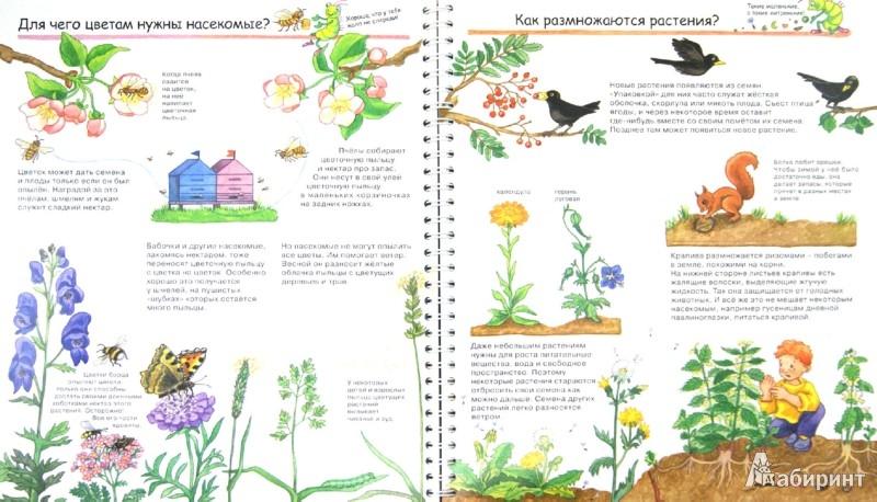 Иллюстрация 1 из 36 для Наш сад - Андреа Эрне | Лабиринт - книги. Источник: Лабиринт