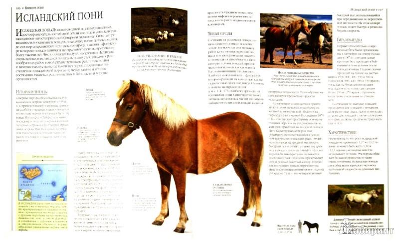 Лошади. содержание уход и лечение