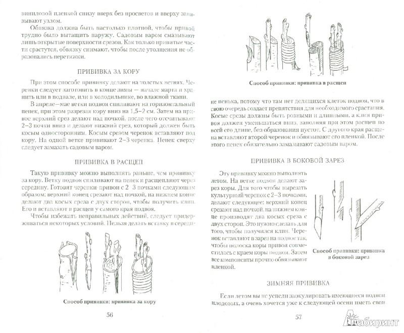 Иллюстрация 1 из 11 для Все об обрезке и прививке деревьев и кустарников - Виктор Горбунов   Лабиринт - книги. Источник: Лабиринт