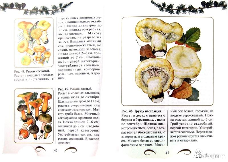 Иллюстрация 1 из 9 для Грибы: съедобные и ядовитые. Иллюстрированный определитель - А. Юдин | Лабиринт - книги. Источник: Лабиринт