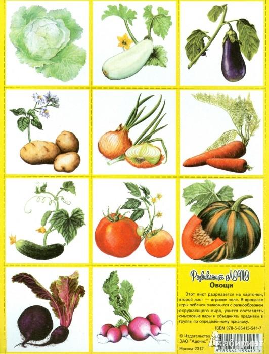 """Иллюстрация 1 из 6 для Развивающее лото """"Овощи""""   Лабиринт - игрушки. Источник: Лабиринт"""