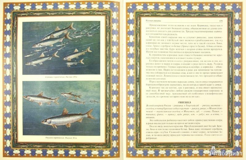 Иллюстрация 1 из 24 для Русская рыбалка. Охота на пресноводных рыб в реках и озерах России | Лабиринт - книги. Источник: Лабиринт