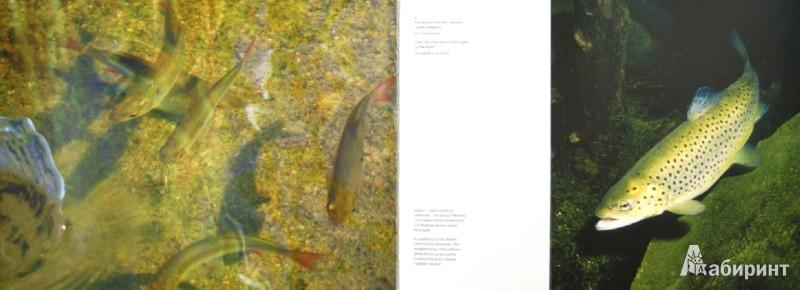Иллюстрация 1 из 2 для Природа острова Котлин - Алексей Коткин | Лабиринт - книги. Источник: Лабиринт
