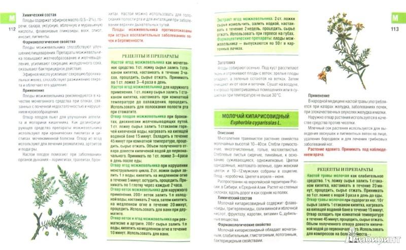 Иллюстрация 1 из 10 для Самые необходимые лекарственные растения - Иван Куреннов | Лабиринт - книги. Источник: Лабиринт