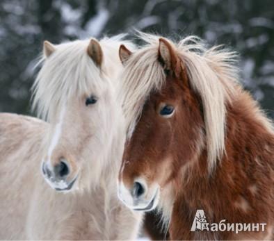 Иллюстрация 1 из 5 для Календарь 2013. Horses/Лошади | Лабиринт - сувениры. Источник: Лабиринт