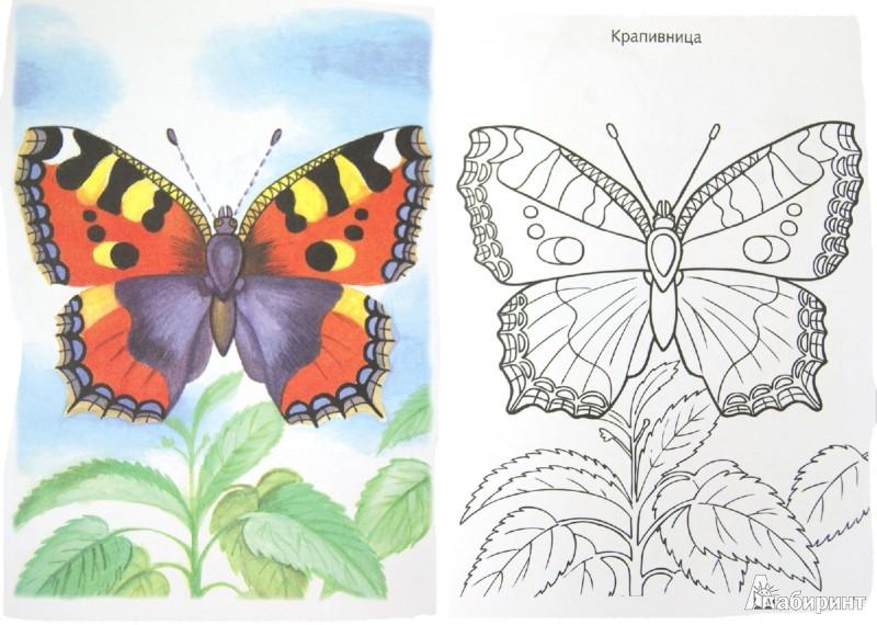 Раскраска бабочек по образцу