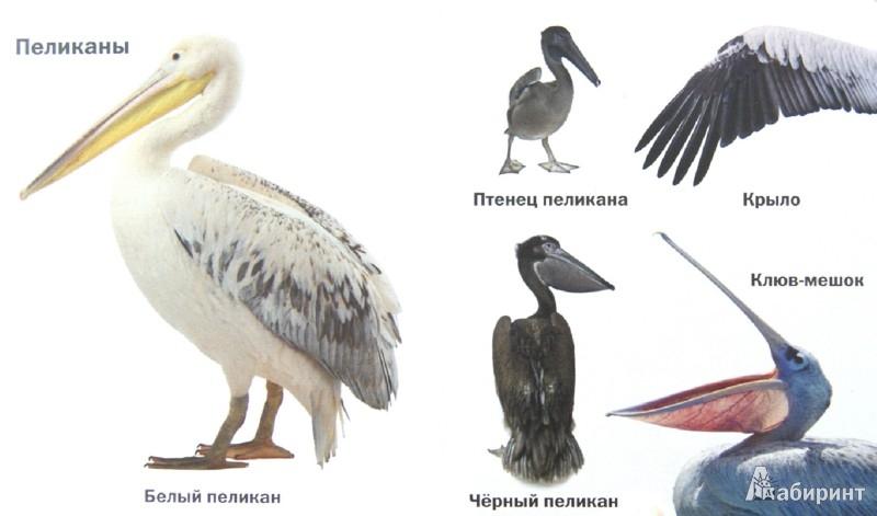Иллюстрация 1 из 11 для Такие разные птицы | Лабиринт - книги. Источник: Лабиринт