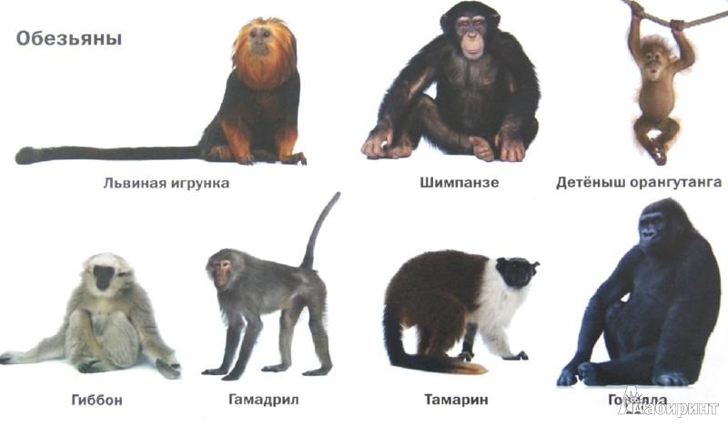 Иллюстрация 1 из 11 для Такие разные животные | Лабиринт - книги. Источник: Лабиринт
