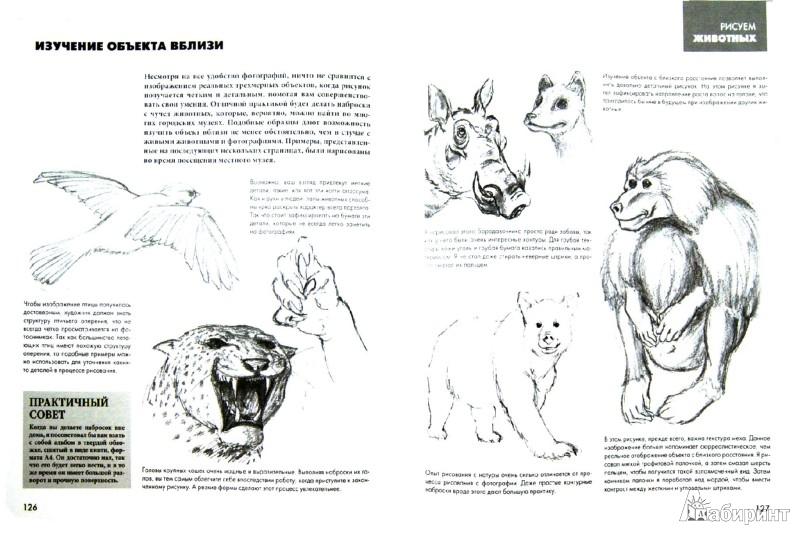 Иллюстрация 1 из 45 для Рисуют все! Полный курс рисования для начинающих - Баррингтон, Грей | Лабиринт - книги. Источник: Лабиринт