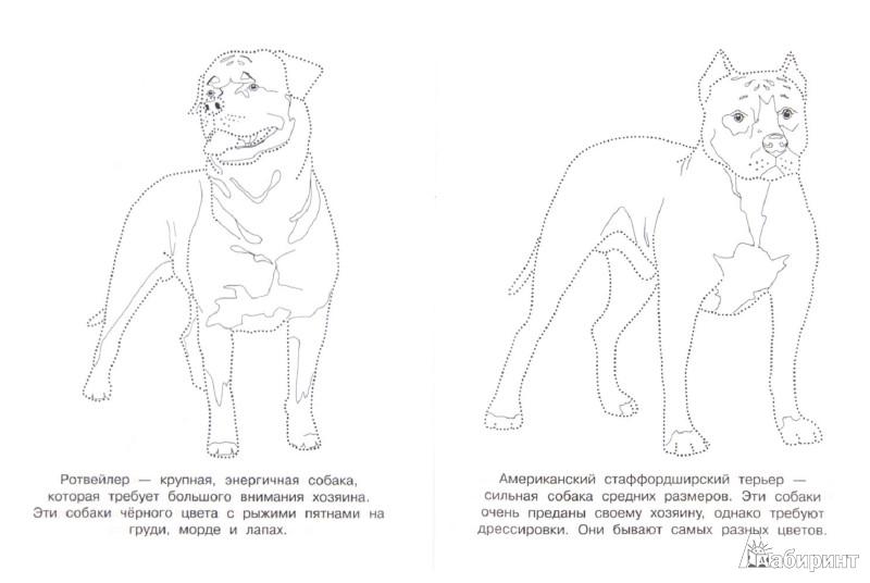 Иллюстрация 1 из 4 для Собачки | Лабиринт - книги. Источник: Лабиринт