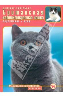Британская короткошерстная кошка. Содержание и уход