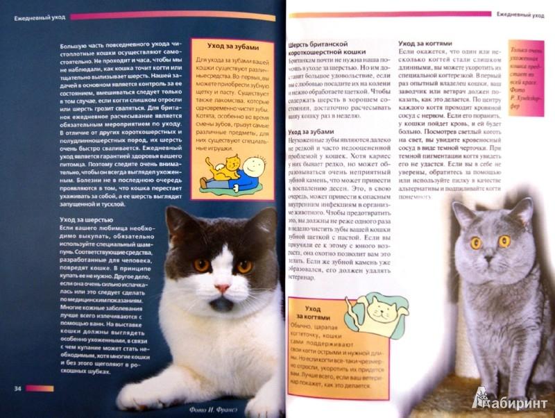Иллюстрация 1 из 9 для Британская короткошерстная кошка. Содержание и уход - Доминик Кизельбах   Лабиринт - книги. Источник: Лабиринт