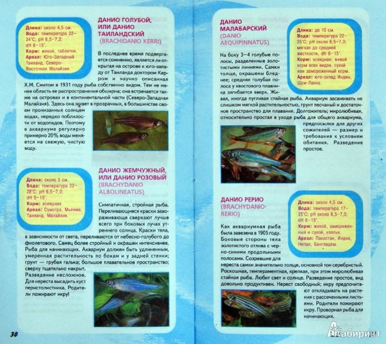 Иллюстрация 1 из 1 для Самые популярные аквариумные рыбки ...: http://www.labirint.ru/screenshot/goods/359341/1/