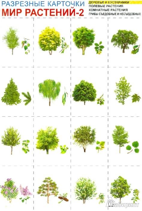Иллюстрация 1 из 11 для Мир растений-2. Комплект разрезных карточек | Лабиринт - книги. Источник: Лабиринт