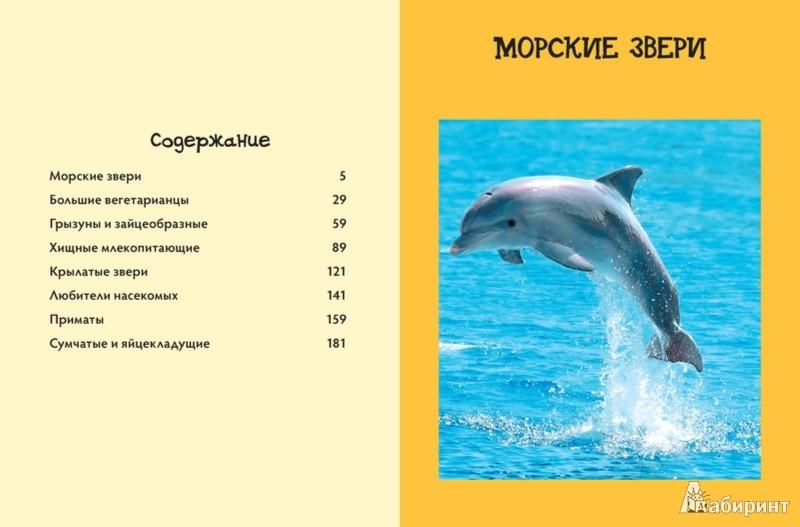 Иллюстрация 1 из 28 для Энциклопедия знаешь ли ты? Млекопитающие - Эми-Джейн Бер | Лабиринт - книги. Источник: Лабиринт
