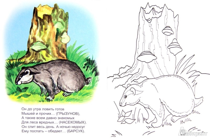 Иллюстрация 1 из 34 для У зверей лесной обед - Юрий Чичев   Лабиринт - книги. Источник: Лабиринт