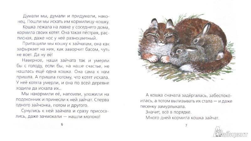 Иллюстрация 1 из 7 для Про зайчат - Евгений Чарушин | Лабиринт - книги. Источник: Лабиринт