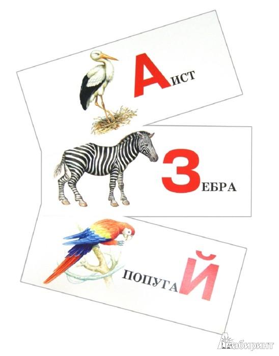 Иллюстрация 1 из 11 для Живая азбука. Набор карточек | Лабиринт - книги. Источник: Лабиринт
