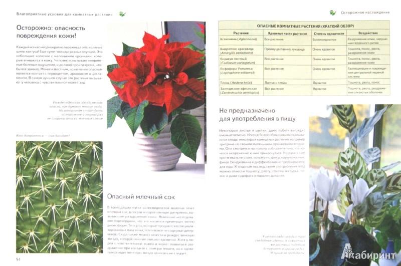 Иллюстрация 1 из 4 для Все о комнатных растениях. 250 видов.  Полное руководство - Бросс-Бурхард, Вайденвебер | Лабиринт - книги. Источник: Лабиринт