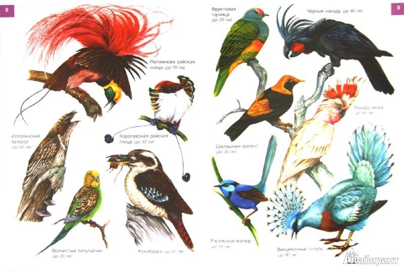 Иллюстрация 1 из 18 для От страуса до колибри. Экзотические птицы - И. Бабенко | Лабиринт - книги. Источник: Лабиринт